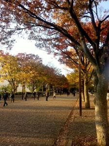 yoyogipark01